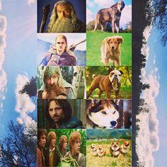 I want the entire #pack lol #lotr #thefellowship #nerdhumor #asdog #dogs #lordoftherings #movielove #booklove #legolasforlife #hobbits as #corgis is #hilarious #fangirl #tolkeinforlife #Gandalf #aragon #strider #frodo #sam #merry #pippin #gimli no room for #Boromir