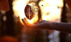 Ayurvéda : Son approche n'est ni envahissante, ni agressive, mais plutôt tout comme les principes de la nature : La Vie, la Lumière et l'Amour. Ces trois
