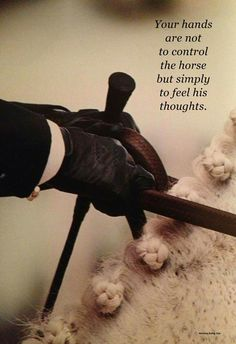 Your hands are not to control the horse but simply to feel his thoughts. - Jean Luc Cornille
