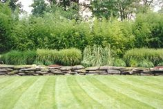 Ferns and ornamental grasses add a soft texture to your landscaping and can be a perfect complement to your rock garden. Ornamental grasses make a dramatic Bamboo Landscape, Lawn And Landscape, Landscape Walls, Landscape Design, Garden Design, Landscape Architecture, Country Landscaping, Landscaping With Rocks, Garden Landscaping