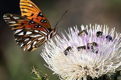 Good News for the Bees: The Government Ends Pesticide Use in Some Wildlife Refuges