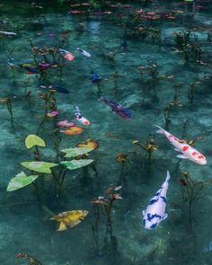 [F]鯉が池の中を泳いでいると思えないくらい水が綺麗で驚いた。実際に見に行ってみたい。 Water Aesthetic, Blue Aesthetic, Aesthetic Photo, Aesthetic Pictures, Doja Cat, Art Inspo, Aesthetic Wallpapers, Art Reference, Scenery