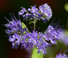 Have an area that receives so much pounding sun all day long that it's hard to grow anything pretty in it? Bluebeard is a great sun shrub (http://landscaping.about.com/od/galleryoflandscapephotos/ig/Pictures_Flowering_Shrubs/caryopteris_with_bee.htm). Here are 9 more you'll love: http://landscaping.about.com/od/landscapingshrubsbushe1/tp/Shrubs-for-Sun-the-10-Best-Bloomers.htm