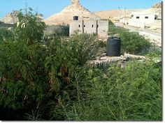 Jordan Valley Permaculture Project - Greening the desert. Proper use of contours of the land, plants and water collection and voila....a green desert is possible!
