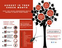 Asian longhorned beetle | ALB Infographic.