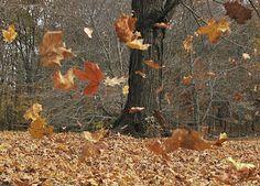 blowing-leaves.jpg - twitchwidget