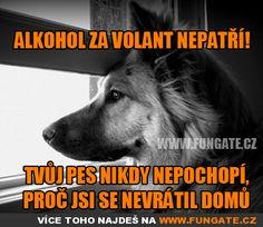 Presne, pes je niekedy lepší a vernejší priateľ ako človek.