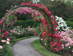 Rose Arbor flanked by rose bushes. Very easy. Chose better colors.
