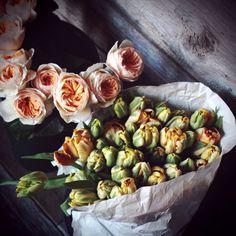parrot tulips // ranunculus