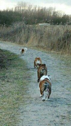Four muskerteers