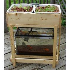 Modern aquaponics: backyard sustainable gardens using fish (Video)