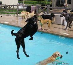 The Dog Pool Is So Fun - funnydogsite.com #dogs #funny #cute