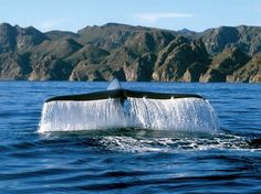 Blue whale Loreto Baja California Sur Cancun remains the No. 1 top destination with regard to U.S.A vacation in foreign…