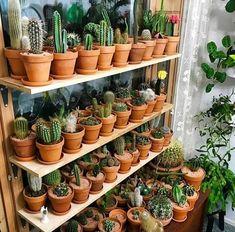 Cactus flower – Home Decor Gardening Flowers Indoor Cactus Plants, Cactus House Plants, House Plants Decor, Plant Decor, Succulent Landscaping, Succulent Gardening, Cacti And Succulents, Mini Cactus Garden, Cactus Flower