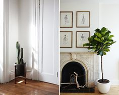 We're obsessing over a new NYC plant delivery service making it way too easy to get our greens AND keep them alive. Get their ten essential plant care tips inside...