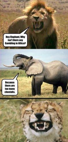 Gambling in africa lol pugs, funny pins, funny memes, funny stuff, random Memes Humor, Cheetah Comics, Lol, Funny Puns, Funny Quotes, Funny Stuff, Funny Things, Bad Puns, Hilarious Memes