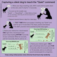 "How to stop dog barking? Teach your dog the ""Quiet"" command. - I know a few dogs that could use this"