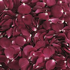 Red Wine Freeze Dried Rose Petals are a great way to add mysterious beauty to your reception or special event. These deep burgundy red Freeze Dried Petals have a natural fragrance, are Eco-friendly, and can be re-used over and over again throughout the year!