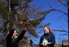 Wildlife Rehabilitation Program