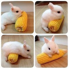 I must get in shape - AWW - - Hey! I've got some rabbit on my corn! Aww nevermind The post I must get in shape appeared first on Gag Dad. So Cute Baby, Cute Baby Bunnies, Cute Babies, Tiny Bunny, Adorable Bunnies, Funny Bunnies, Cute Little Animals, Cute Funny Animals, Cute Animal Memes