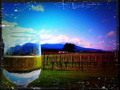 Grovetown Marlborough NZ