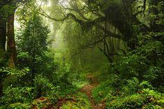 Doğa Manzara 429 | Kişiye özel binlerce 3 boyutlu duvar kağıdı, kendi görselinizi de duvar kağıdı olarak sipariş edebilirsiniz. Ayzun.com