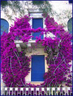 Monterosso, Italy Copyright: Lyndall Lazar