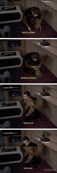 How to train your cat...Oh Data and Spot!!!
