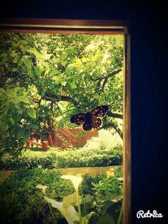 #butterfly #creta #rethimno #plakias Aquarium, Butterfly, Painting, Art, Goldfish Bowl, Art Background, Aquarium Fish Tank, Painting Art, Kunst