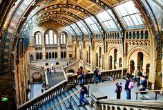 Londra, Museo di Storia Naturale,20 foto dei viaggiatori che ti toglieranno il fiato