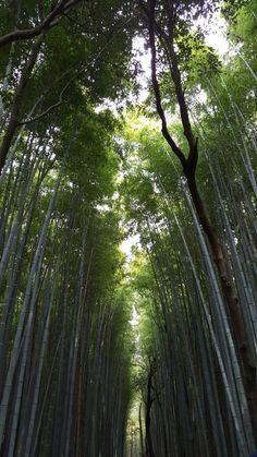 #arashiyama#아라시야마#대나무숲길