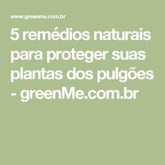 5 remédios naturais para proteger suas plantas dos pulgões - greenMe.com.br