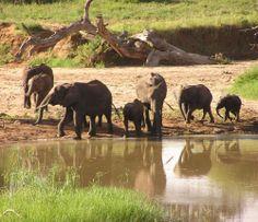 #słoń