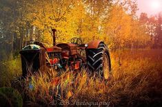 #Repost @laurenbrownphotographyedson  Fall Massey. Alberta Canada .  Copyright Lauren Brown Photography 2016. If you would like to repost/share my photo please feel free to do so all I ask is please physically tag & credit me so I can thank you!