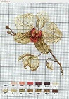 Grafico orquídea