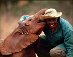 The David Sheldrick Wildlife Fund: Al lifetime dedicated to the protection and preservation of Africa's wildlife and its denizens, particularly endangered species such as elephants and black rhinos