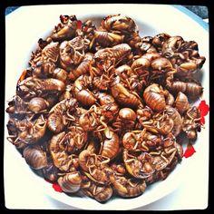 Cicada Food | ... eat them? 你敢吃吗?#cicada #insect #sharefood #food #蝉 #知了
