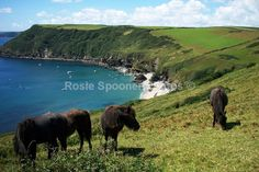 Ponies at Lantic Bay - Cornwall Misc Cornwall Coast, When I Dream, Ponies, Prints For Sale, Photo Book, Explore, Adventure, Drawings, Water