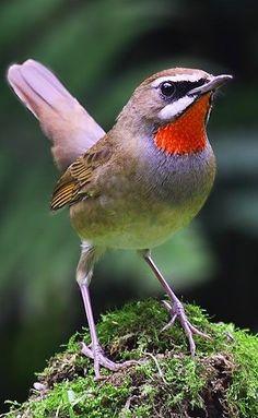 900 Ideas De Aves Pajaros Aves Pajaros Aves Pajaros