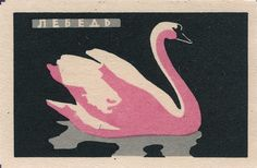vintage swan illustration
