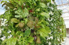 True Farm - vertical aquaponic farming with Tower Gardens