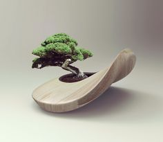 A Bonsai tree brings balance and zen to this Overcast beige pot by Aarish…