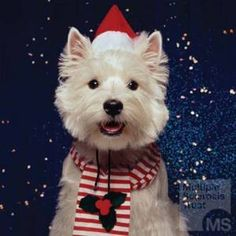 West Highland White Terrier Westies Merry Christmas Card Westie Puppy Holiday Dogs Santa Claus Dog Puppies