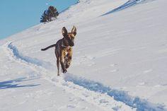 Reposting @amanda_prat: Lina al rescate😍 . . #wild #dog #my #baby #love #dosgtagram #dogs #life #instadog #puppy #snow #fun #photo #vsco