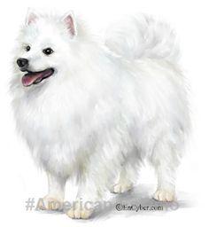 Love American Eskimo. #AmericanEskimo #dogs