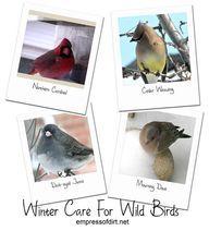January ~ Winter Garden | Our Fairfield Home & Garden