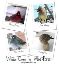 Winter Care For Wild