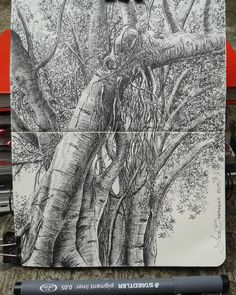 #sketch #moleskine #tree Lidia Barragán