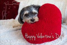 Kuvahaun tulos haulle valentines day cute animals