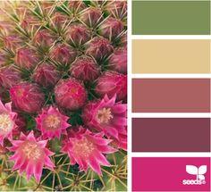 Con los colores de un cactus..